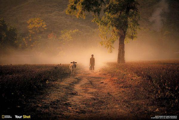 인도의 어느 홍차밭. 안개에 둘러싸인 소년