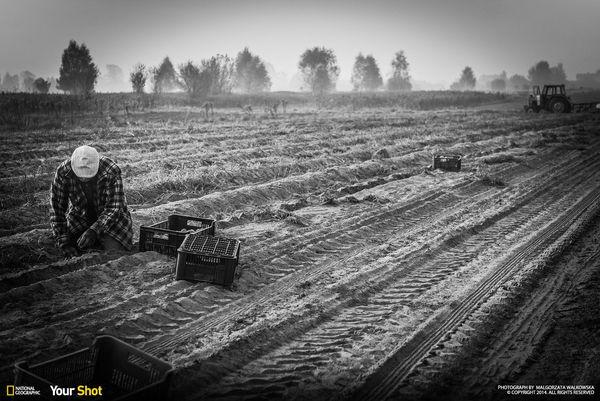 """감자를 캐는 폴란드의 어느 농부. """"나는 이 남자와 몇 분간 대화를 나누었다. 그리고 슈퍼에서 무심코 구입하던 감자에 대한 생각이 바뀌었다."""""""