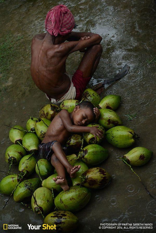 인도 동부의 어느 수영장. 어린 아들과 나와 코코넛을 파는 아버지