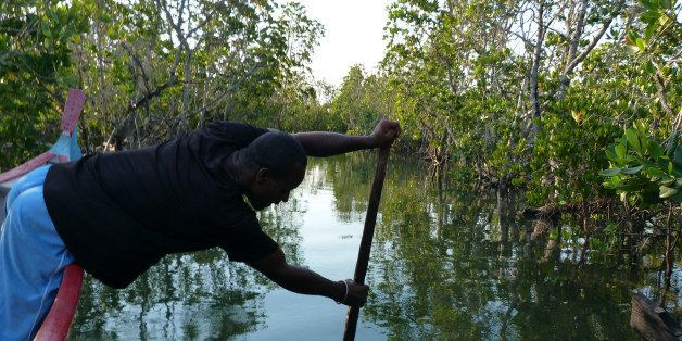 A fisherman crosses the mangrove on his canoe on November 11, 2011 in Belo-sur-Mer, western Madagascar.  Mangroves spread ove