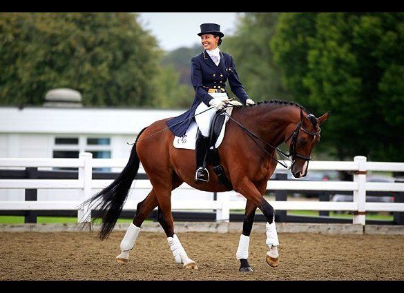 Any sport that requires the purchase and stabling of a horse isn't going to be cheap from the start. Dressage entails a horse