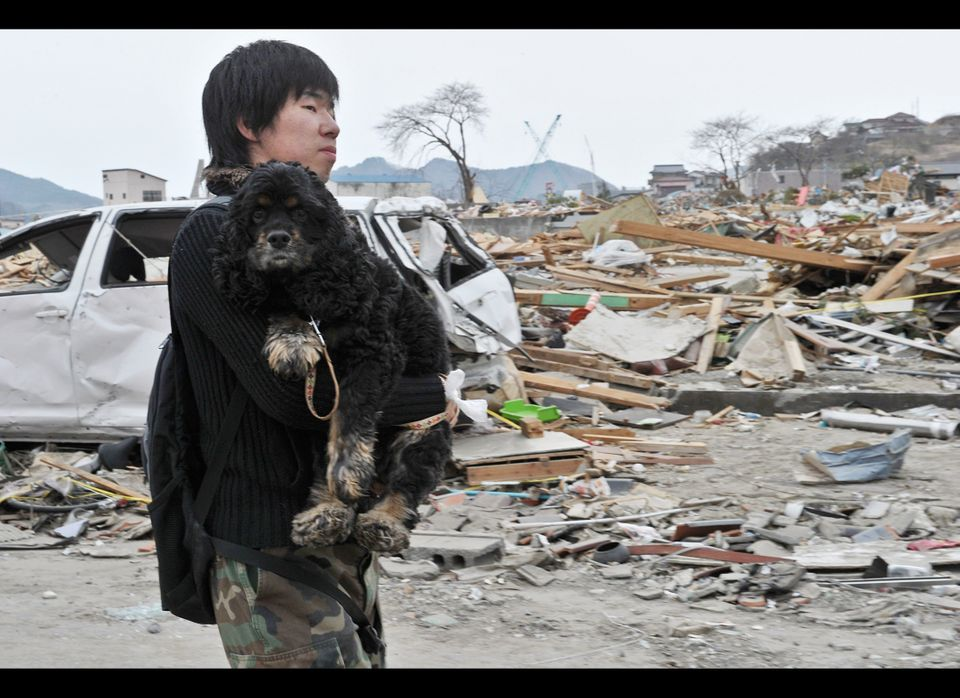 "After the 1995  ""Great Hanshni-Awaji"" earthquake, the Animal Rescue Kansai (ARK) played an integral part in rescuing and assi"