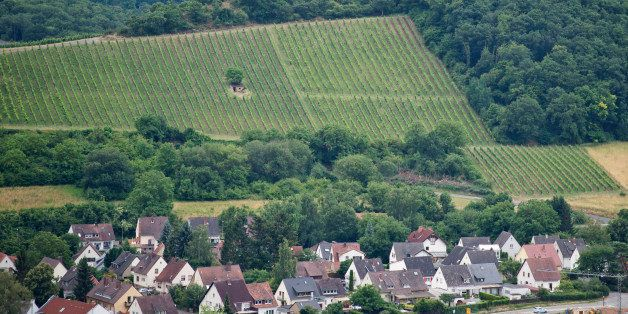 Bad Kreuznach, Germany - July 09: A vineyard next to a forest in front of a village  on July 09, 2015 in Bad Kreuznach, Germa