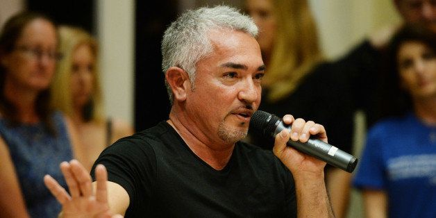 PLANTATION, FL - NOVEMBER 08: Cesar Millan attends Cesar Millan's Pawsitive Leadership Event on November 8, 2014 in Plantatio