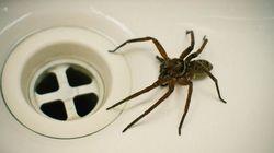 Spinnen-Invasion in Deutschland? Das sagt eine Expertin dazu