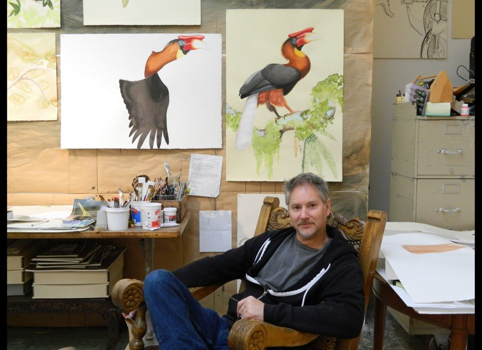 In the background, paintings of the Rufous Hornbill.