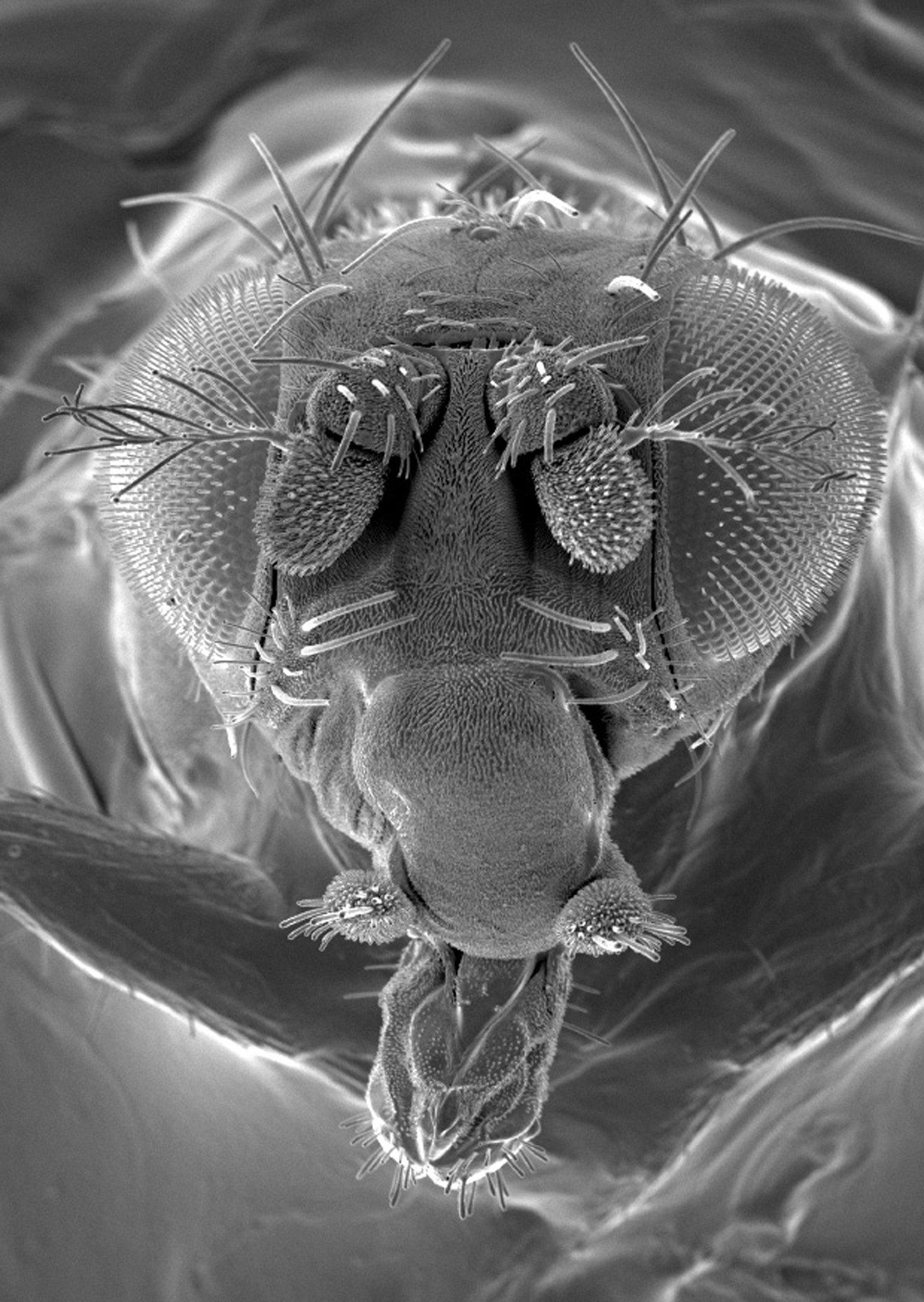 Ένα σκουλήκι «χορεύει» μπροστά στο μικροσκόπιο και κερδίζει