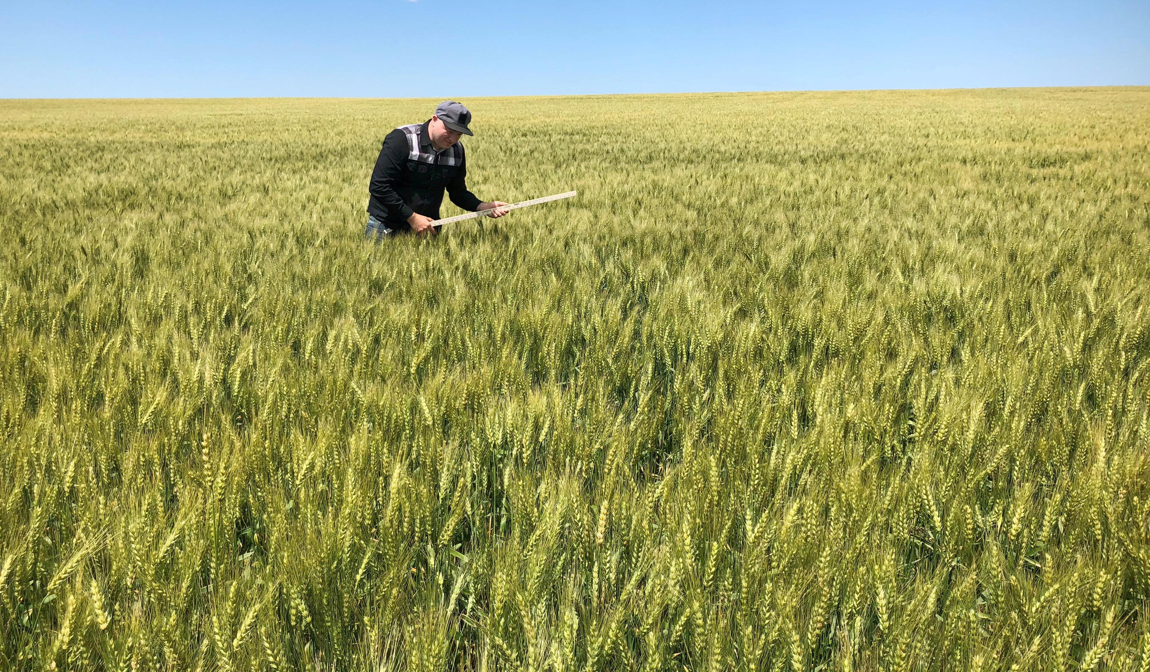 Suspension des droits de douane sur le blé tendre dés le 1er