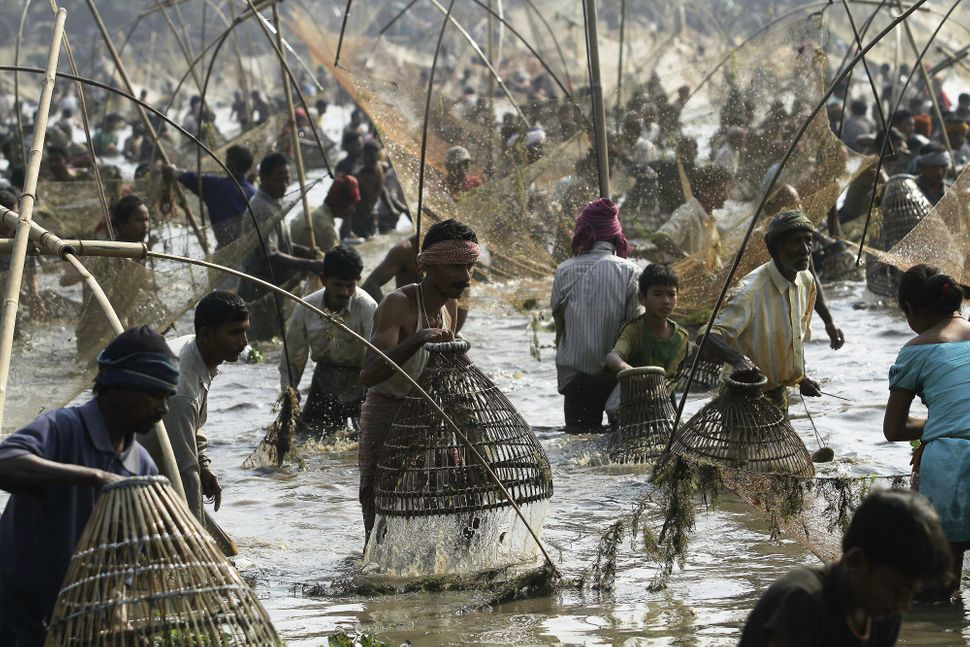 Indian villagers participate in community fishing as part of the Bhogali Bihu celebrations at the Goroimari Lake in Panbari v