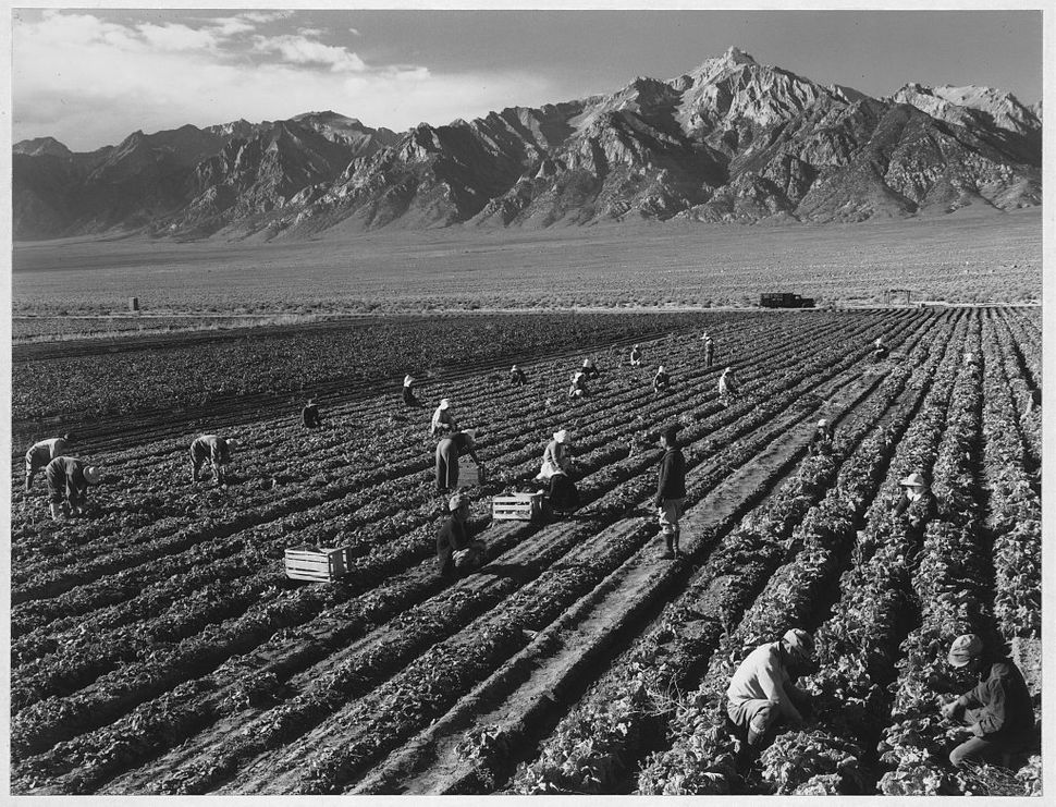 Farm Workers, Mt. Williamson In Background