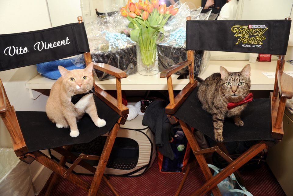 Two feline actors, Vito Vincent, left, and Chessie pose for a photo in their dressing room opening day of the new Broadway pl