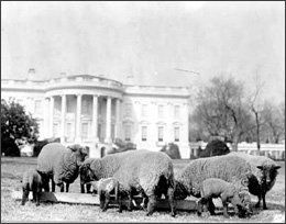 "Woodrow Wilson had a tobacco-chewing ram, Old Ike, and a herd of as many as <a href=""http://www.whitehousehistory.org/history"