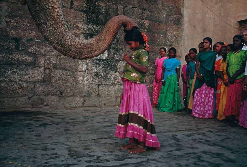 Robb Kendrick, Blessings from The Elephant Velliamma at Nataraja Temple, Tanjore, India, 1992