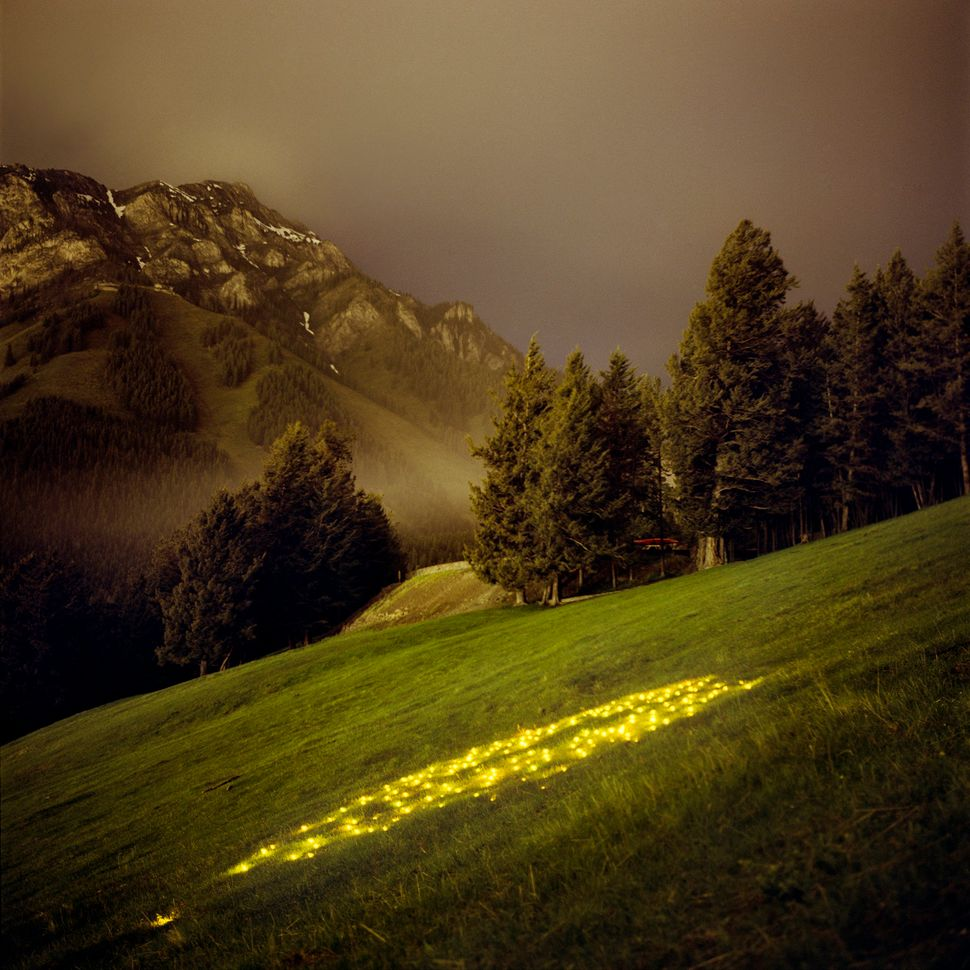 Norquay (Yellow)