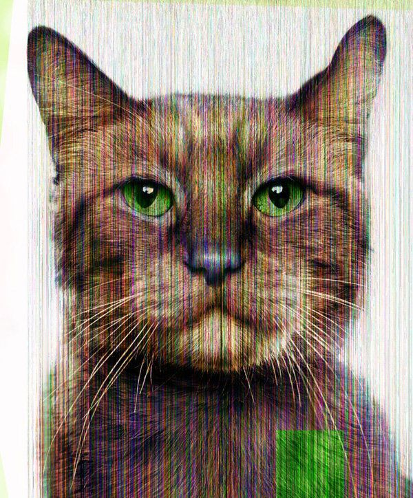 "<a href=""http://www.jillgreenberg.com/"" target=""_blank"">Jill Greenberg</a>, ""Glitch Cat (Morris),"" 2014"