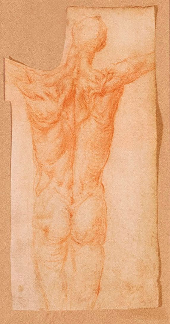 Jacopo Pontormo, Study of a Male, 1528-1530, Red chalk on paper, 14 x 6 in. Collection of Mr. and Mrs. Mark Borghi.