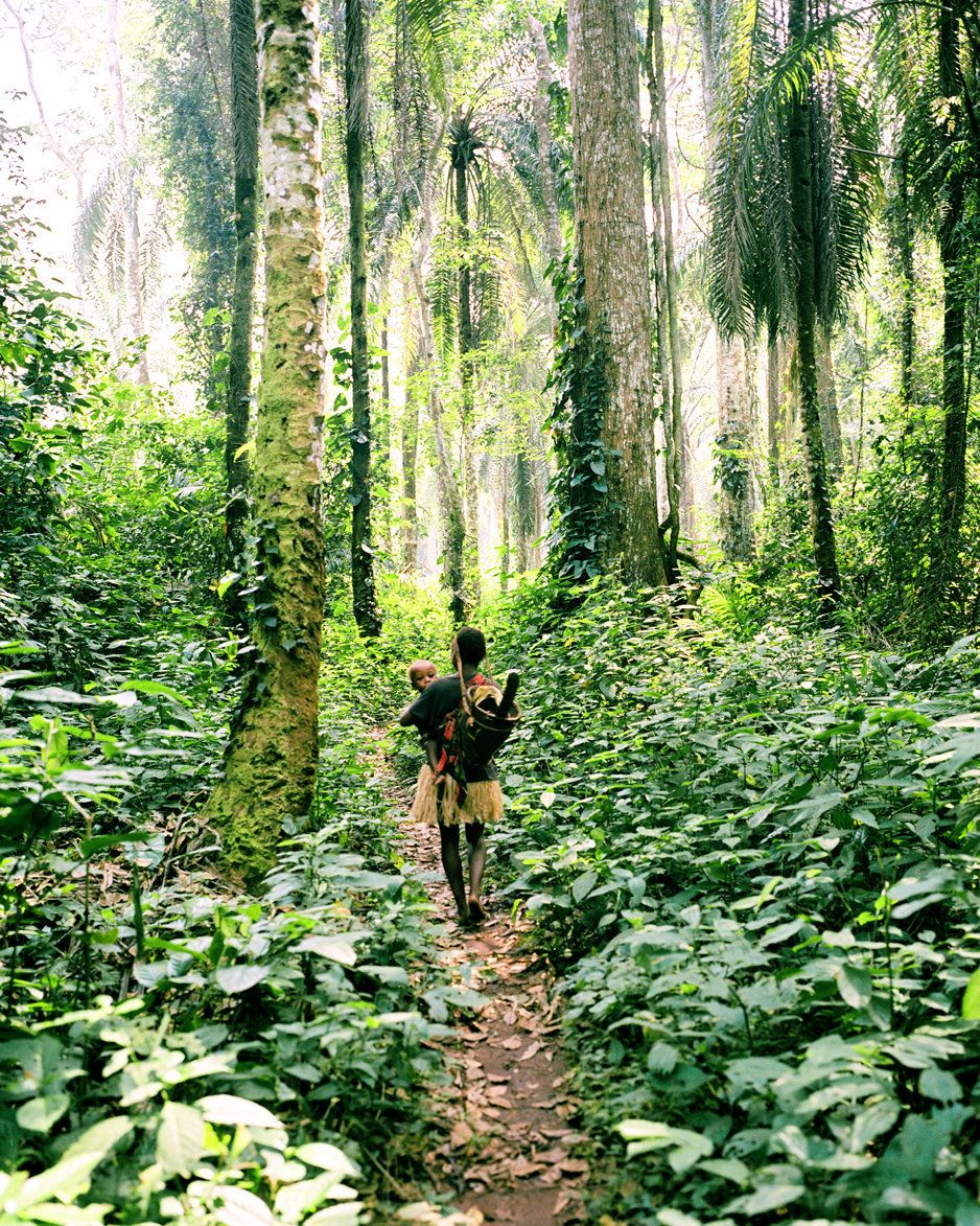 In the Congo Basin, a 'pygmy' mother carries her baby while she gathers wild plants and nuts in the forest.  For many tribal