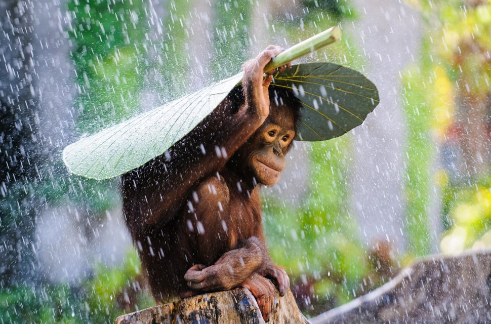 "(c) Andrew Suryono, Indonesia, Entry, Nature and Wildlife Category, Open Competition, 2015 <a href=""http://www.worldphoto.org"