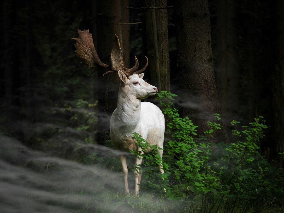 "(c) Georg May, Germany, Entry, Nature and Wildlife Category, Open Competition, <a href=""http://www.worldphoto.org/about-the-s"