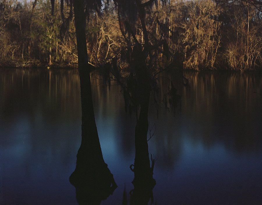 Cypress Trees, Altamaha River