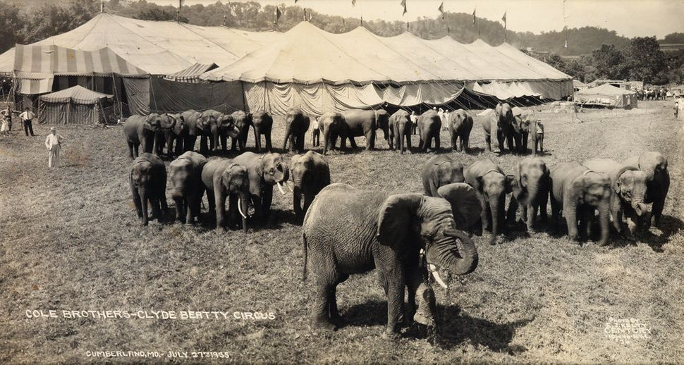 Sale 2374 Lot 36: KELTY, EDWARD J. (1888-1967) Group of 4 animal-centric circus panoramas, with elephants out front of the Co