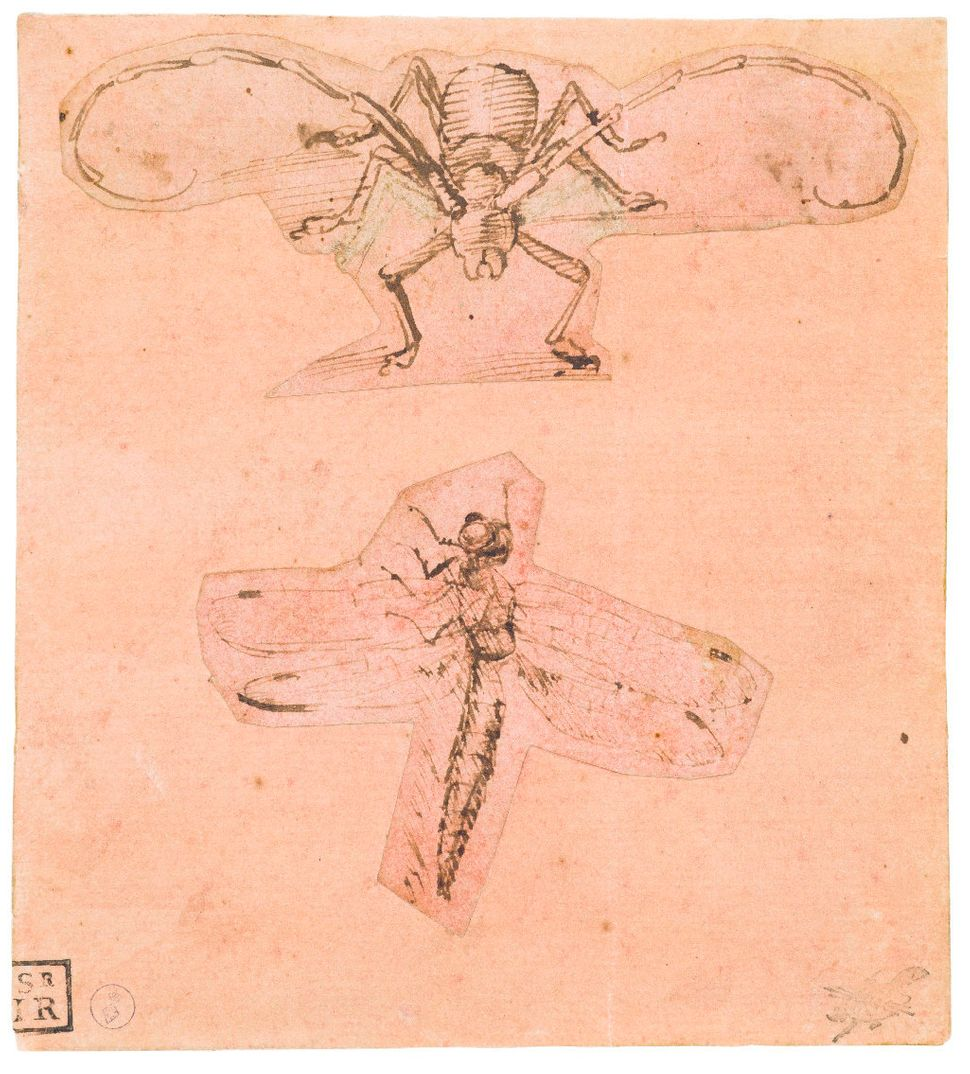 """Two Studies of Insects,"" (""Study of a Beetle"" and ""Study of a Dragonfly""), circa 1480-1500 and 1505, Leonardo da Vinci."