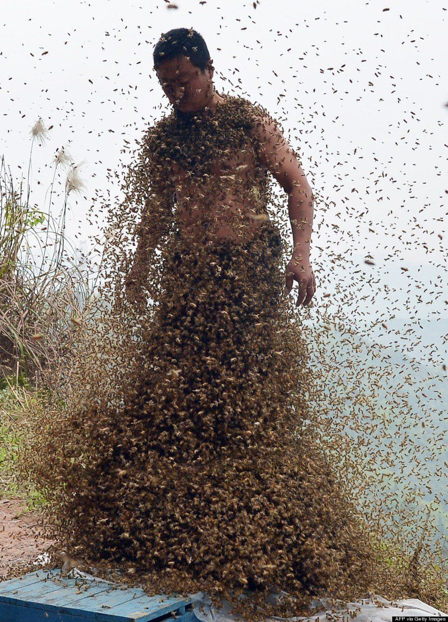 This picture taken on April 9, 2014, shows She Ping, a 34 year-old local beekeeper, covered with a swarm of bees on a small h