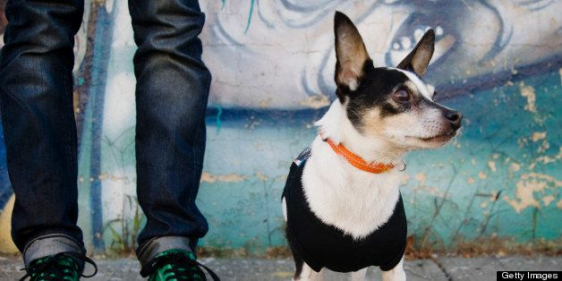 Small dog standing in front of the feet of his owner and a graffiti wall in Williamsburg, Brooklyn, New York.