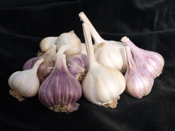Garlic has been credited with warding off everything from vampires to the plague. One whiff, and you know it's powerful. It's