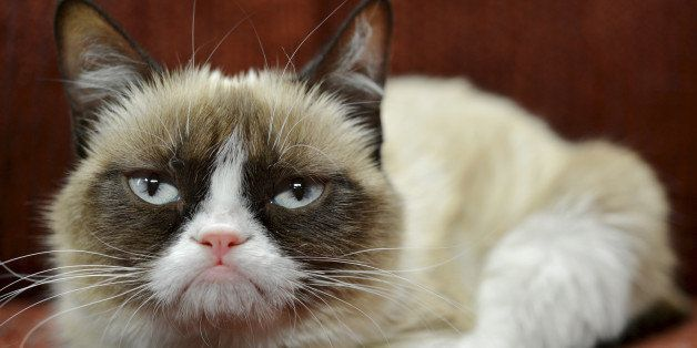 In this undated photo provided by Nestle Purina PetCare is Grumpy Cat. It probably won't affect her famous mood, but Grumpy C