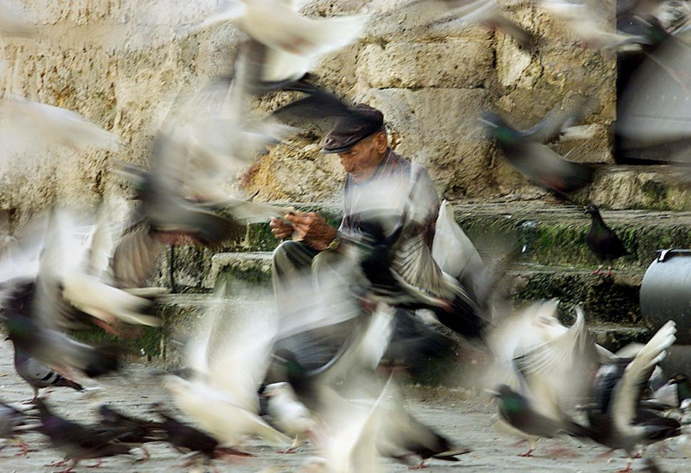 2001 - A man reads as he sits in a plaza surrounded by pigeons in Havana.