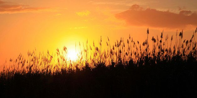 Sun setting behind sugarcane plants at Beau-Bassin, Mauritius, Africa