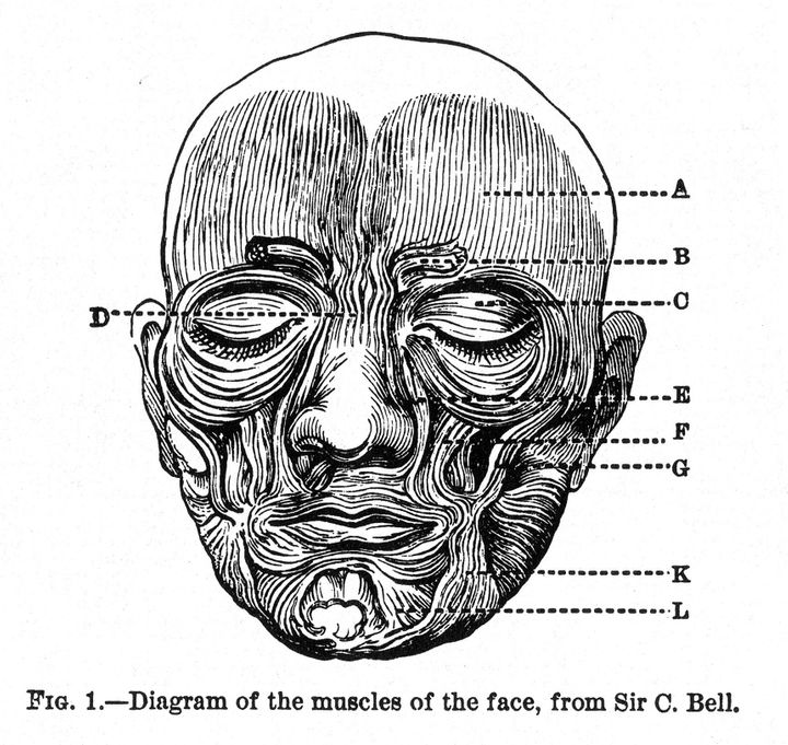Description Figure 1 from Charles Darwin 's The Expression of the Emotions in Man and Animals , showing human facial muscles