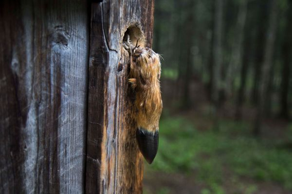 In this June 17, 2014 photo, a deer's hoof used as a door handle, hangs from the front door of the home where North Koreans s