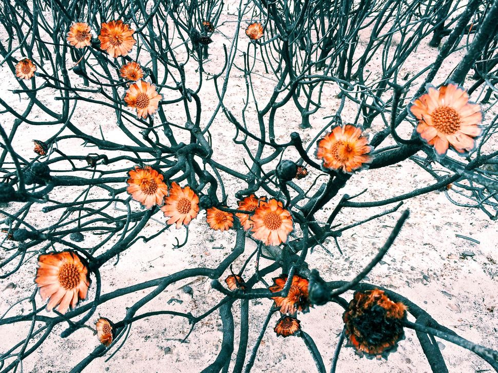Photographer: Amy Paterson<br> Category: Flowers, first place<br> Location: Cape Town, South Africa