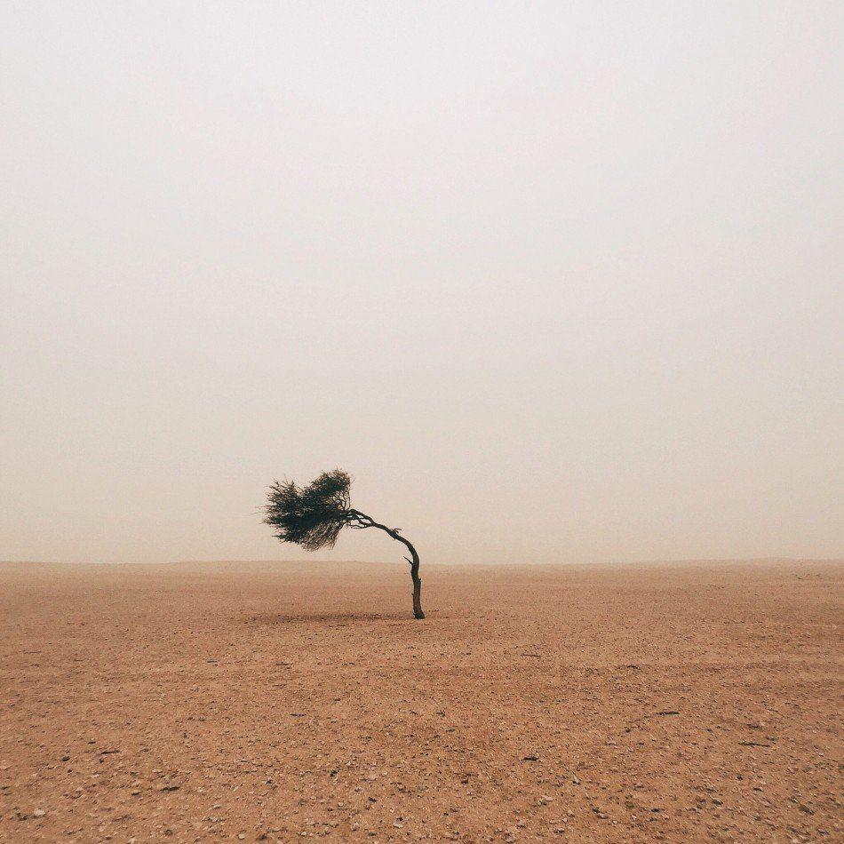 Photographer: Ruairdh McGlynn<br> Category: Trees, first place<br> Location: Edinburgh, United Kingdom