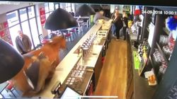 Fugitive Horse Busts Into Bar, Bucks Wildly As Customers Run For