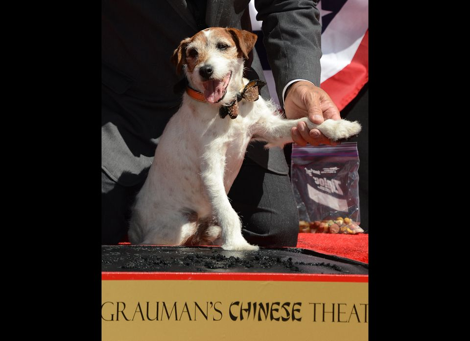 Uggie, the dog who starred in the Academy Award-winning film 'The Artist,' puts his paw into cement as he is honored with a h