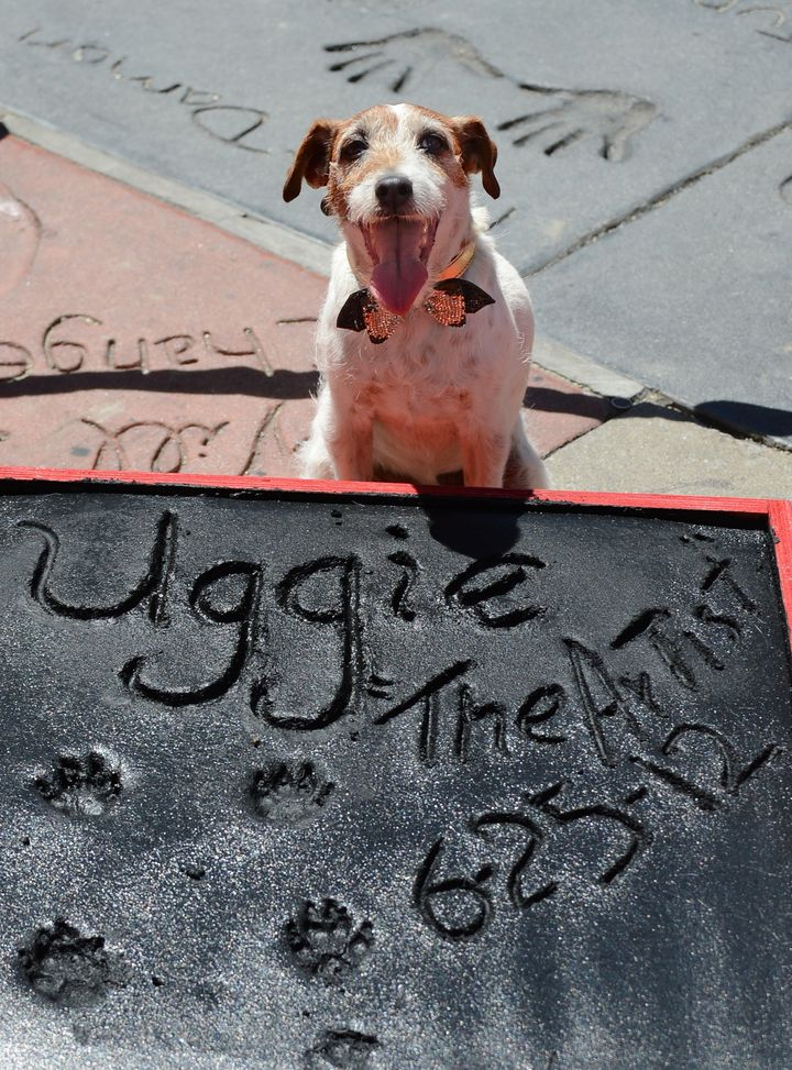 Uggie, the dog who starred in the Academy Award-winning film 'The Artist,' is honored with a hand and paw print ceremony outs