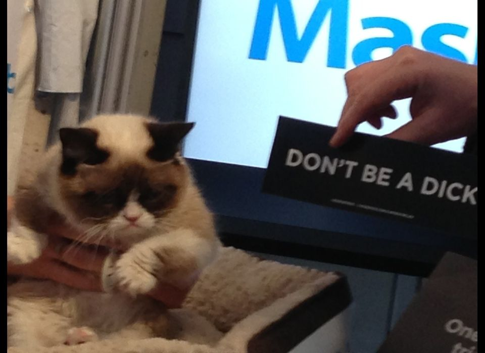 Grumpy Cat in the flesh and giving attitude at the Mashable Tent, attracting a line of people that wound around 2 blocks.