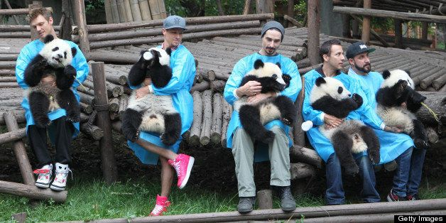 CHENGDU, CHINA - MAY 30:  (CHINA OUT) Members of the Backstreet Boys hold giant pandas at the Giant Panda Breeding Research I