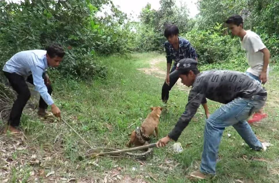 Μικροί ήρωες! Παιδιά σώζουν τον σκύλο τους από τεράστιο πύθωνα