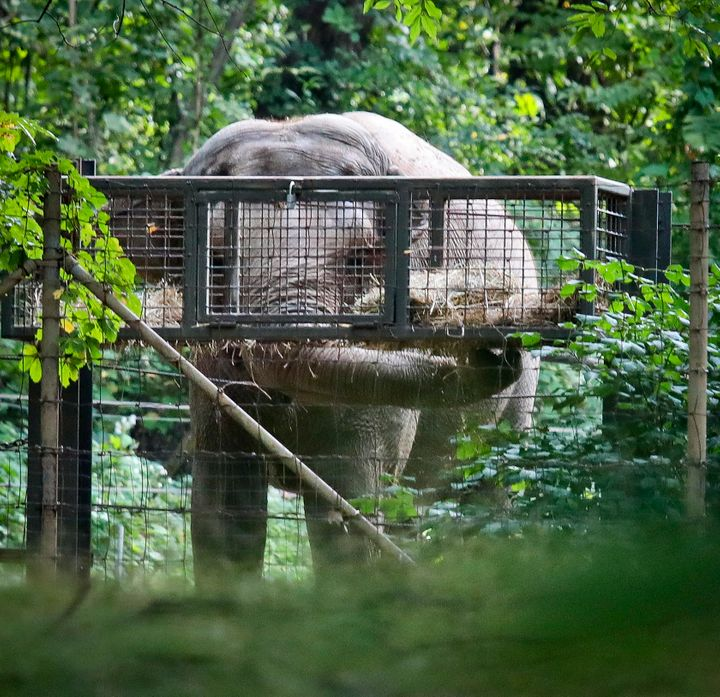 "The Nonhuman Rights Project has likened Happy's life at the Bronx Zoo to ""solitary confinement,"" while the zoo contends that"
