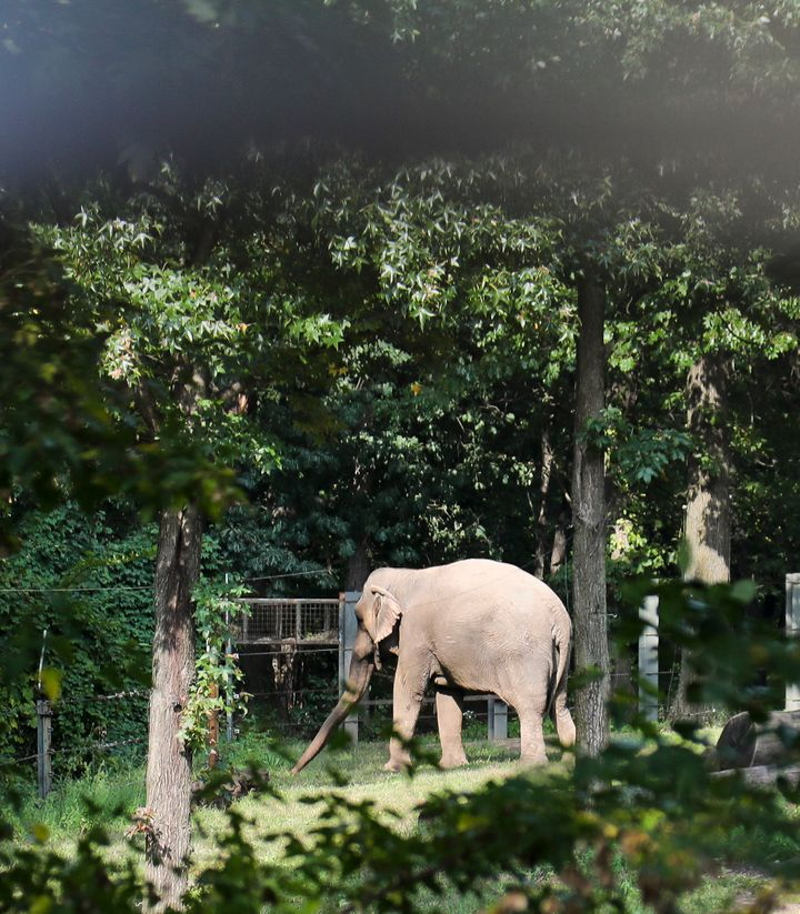 The Nonhuman Rights Project wants Happy moved to a sanctuary where she would have more space and the opportunity for a richer