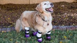 한국서 학대당해 네 다리 절단된 개가 미국에서 '영웅견' 상 받게 된 사연