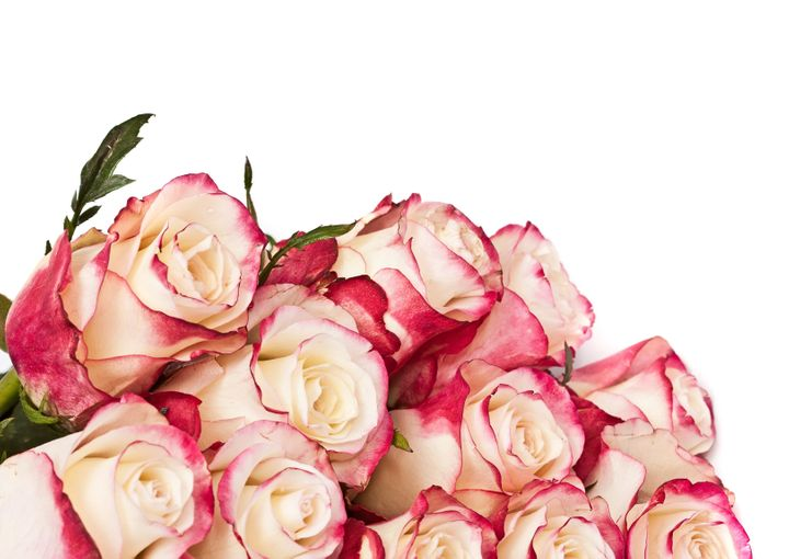 roses  on the white  with place ...