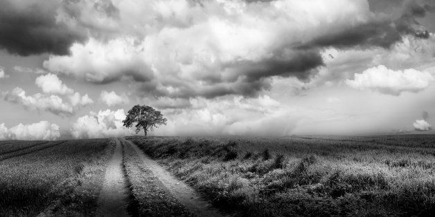 Landscape with a lonely tree in black and white.