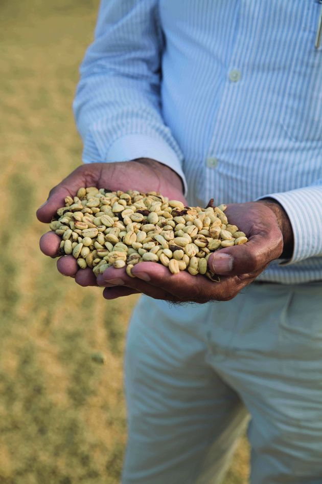 도미니카 공화국의 시바오 알투라 지역의 농부는 습한 섬 날씨에 구애받지 않고 산의 비호 속에서 커피를