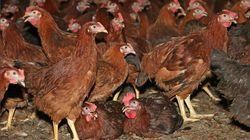 아버지가 처음으로 닭 잡은 경험을 들려준 적이