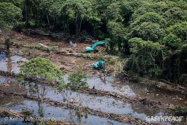 팜유로 인해 산림 벌채가 일어나고 있다